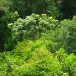07 Canopy
